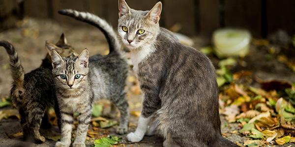 動物医療を支える